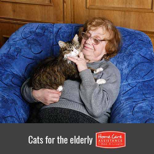 Why Pet Cats are Beneficial to Their Senior Owners