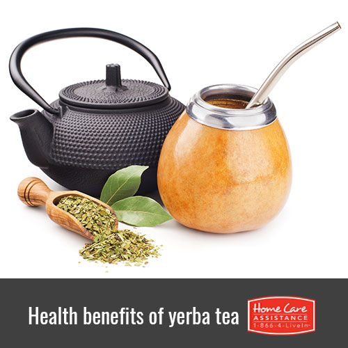 Top Health Benefits of Drinking Yerba Mate for Seniors