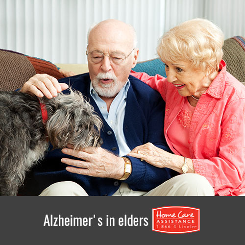 How Pet Therapy Can Help Elders With Alzheimer's in Philadelphia, PA
