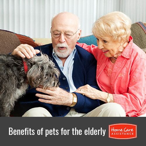 Why Pets Are Beneficial for Seniors in Philadelphia, PA